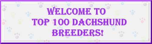 The Top 100 Miniature Dachshund Breeders!